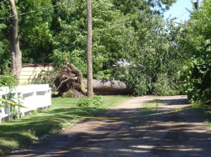 Downed Tree from July 11, 2008, Storm, Central Minnesota
