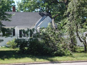 Downed Tree w/Roof Damage, July 11, 2008, Storm, Central MN