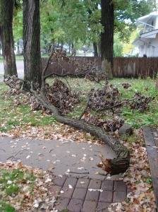The Branch Has Fallen