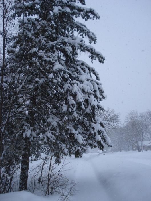 Snow storm, central Minnesota, December 30, 2008