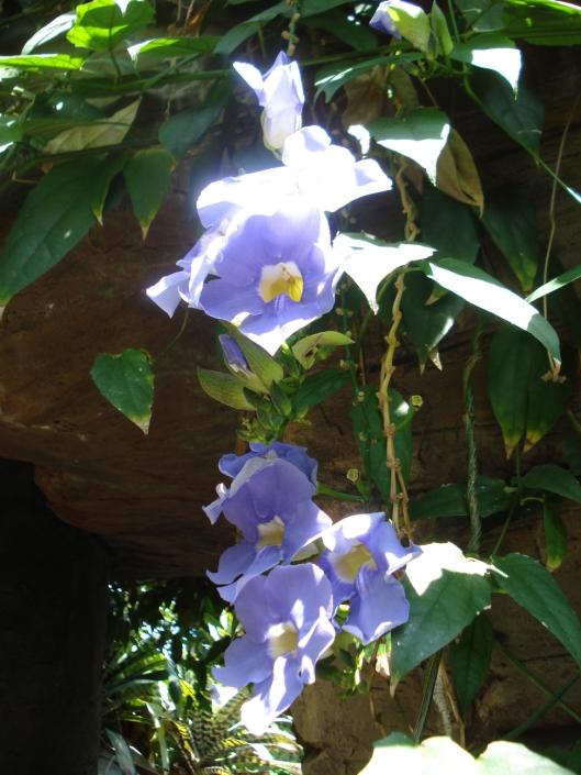 Light purple cascade