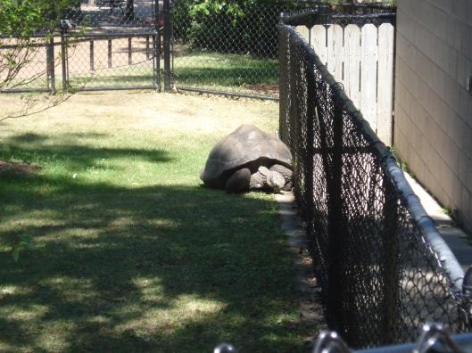 Cute, cuddly tortoise