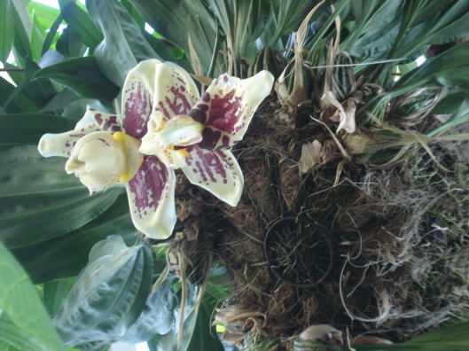 An orchid variety?