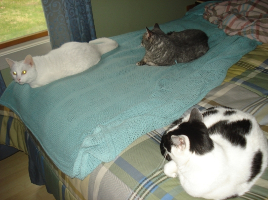 Our three cats, disinterested in the backyard bunnies.