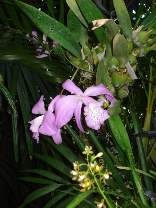 Como Park Conservatory, May 7, 2010. Purple flowers.
