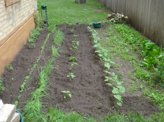 Partially weeded garden at the Warner house, June 19, 2010.