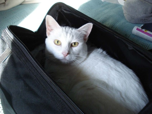 Kitty in a travel bag, Sept. 18, 2010.