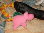 "Small, pink hippo. ""I'm not missing, but my blue elephant buddy is."" January 15, 2011."